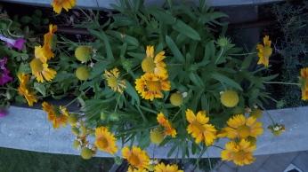 Vackra blommor