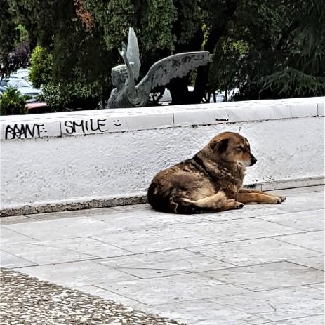 Snäll hund nedanför Town Hall som ler :-)